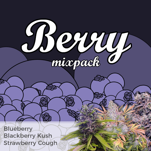 Berry Feminized Cannabis Seed Mixpack