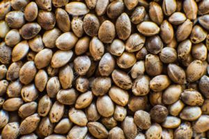 Cannabis Seed Store Background