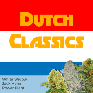 Dutch Classics Feminized Cannabis Seeds Mixpack