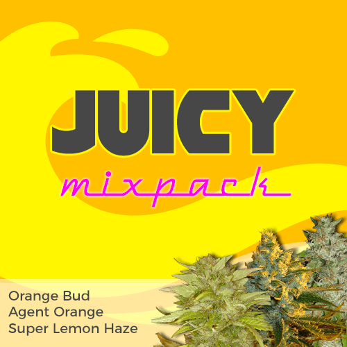 Juicy Feminized Cannabis Seeds Mixpack