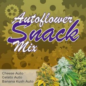 Autfolower Snack Cannabis Seed Mixpack