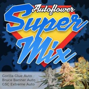 Autoflower Super Cannabis Seed Mixpack
