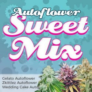 Autoflower Sweet Cannabis Seed Mixpack